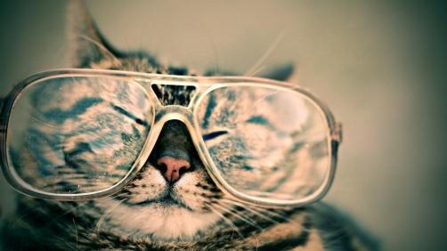 catinglasses